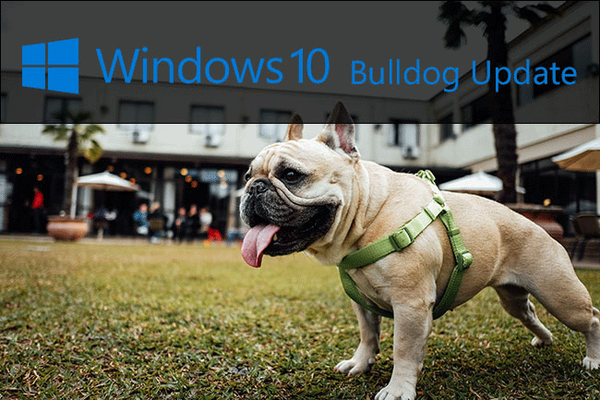 windows-10-updates-after-dogs-004.png