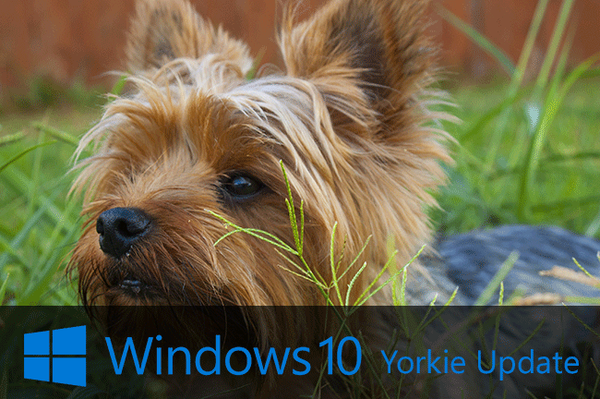 windows-10-updates-after-dogs-005.png