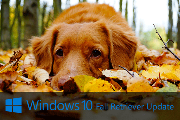 windows-10-updates-after-dogs-007.png